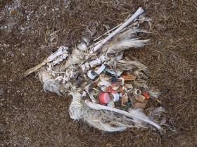Maaginhoud-albatros1